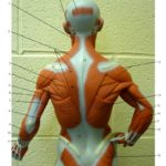Little Muscle Man Upper Body Posterior